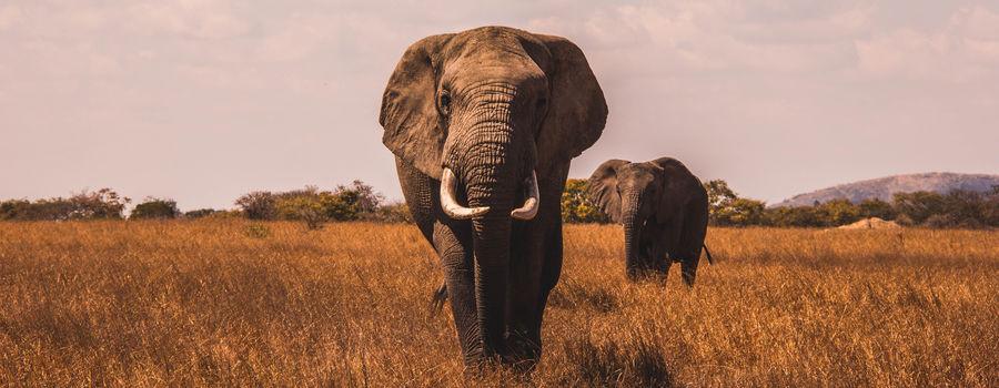 Billede til Safari